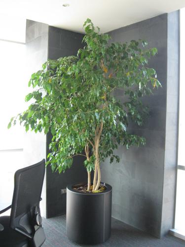 Planta empresa 03 for Plantas decorativas para oficina