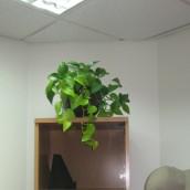 Planta Empresa 05