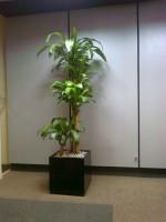 Planta Empresa 06
