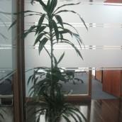 Planta Empresa 09