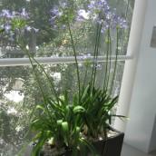 Planta Empresa 11