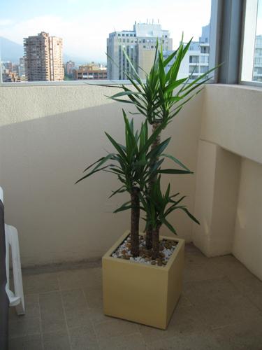 Planta empresa 02 for Plantas de interior precios
