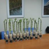 Lucky Bambu en unidad