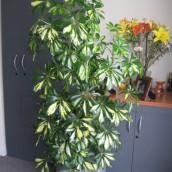 Planta Empresa 07