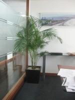 Planta Empresa 08
