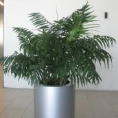 Planta Empresa 10