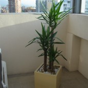 Planta Empresa 02